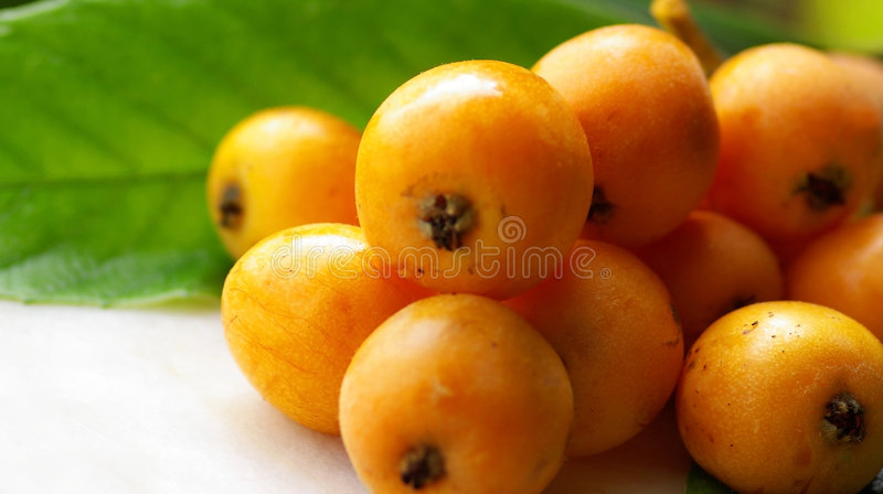 Mature Loquats. royalty free stock images