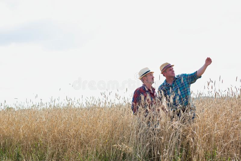 Mature male farmer showing showing wheat corp to senior farmer in field. Photo of Mature male farmer showing showing wheat corp to senior farmer in field royalty free stock photos