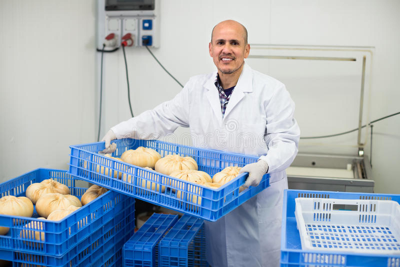 Mature man on cheese production factory stock image