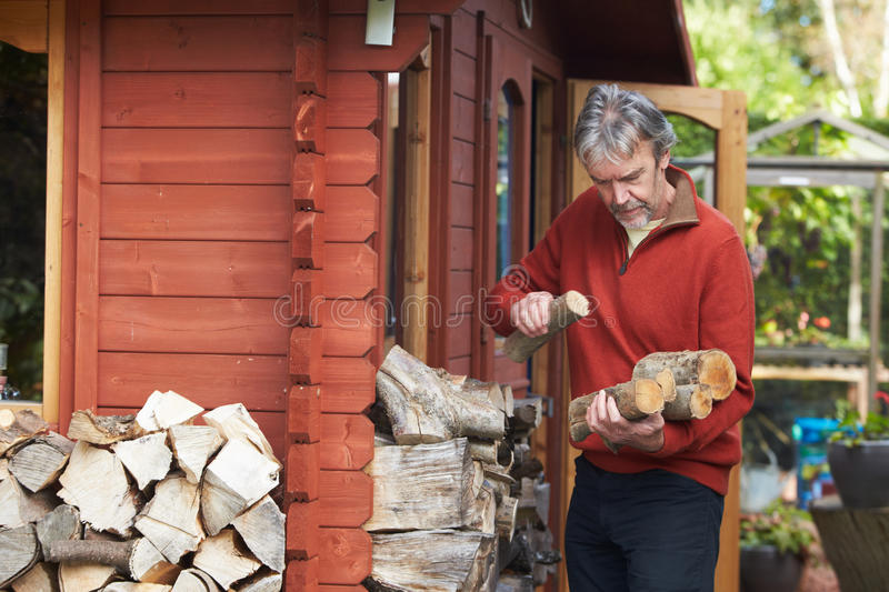 Mature Man Collecting Logs For Fire From Woodpile In Garden. Looking Off Camera stock image