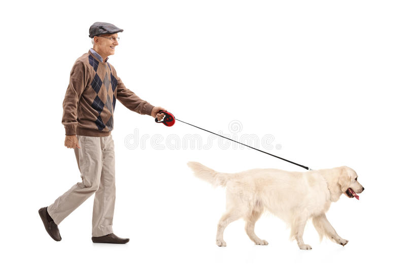 Mature man walking his dog. Isolated on white background royalty free stock image