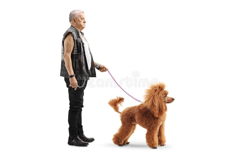 Mature punker standing with a red poodle on a leash. Full length profile shot of a mature punker standing with a red poodle dog on a leash isolated on white royalty free stock images