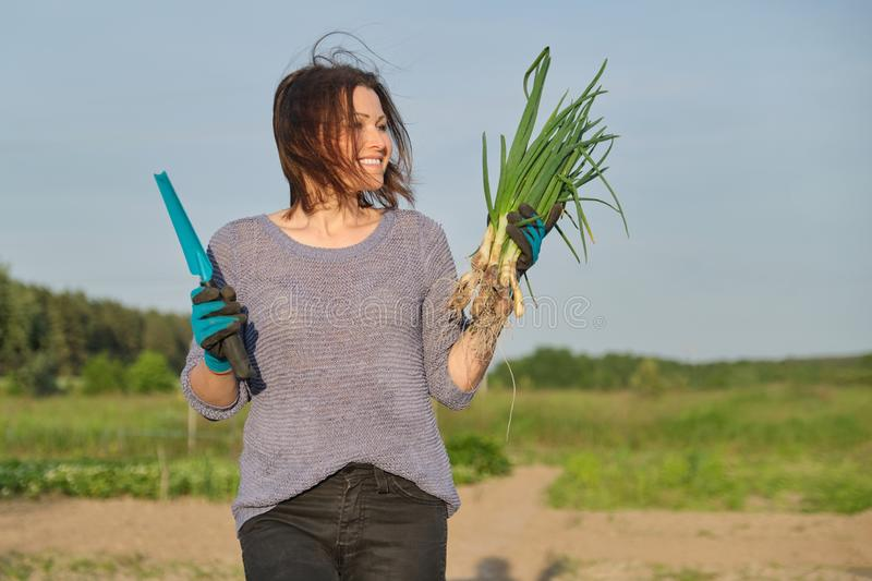 Mature woman farmer walking through the garden with green fresh chive onion stock photography