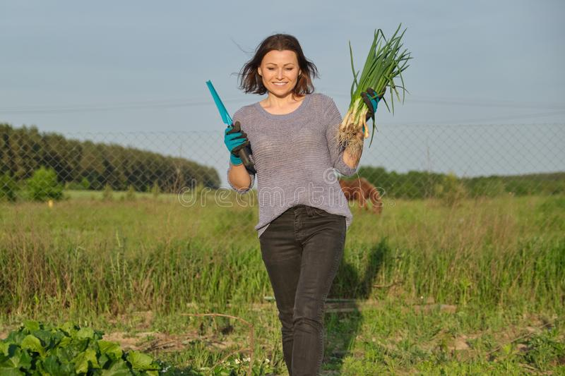 Mature woman farmer walking through the garden with green fresh chive onion royalty free stock photography