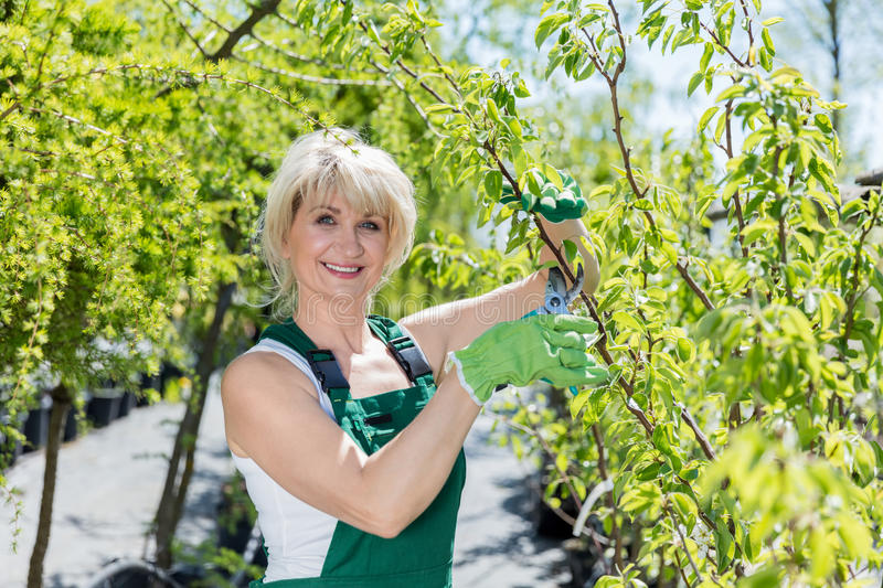 Mature woman gardener cutting a tree branch. royalty free stock images