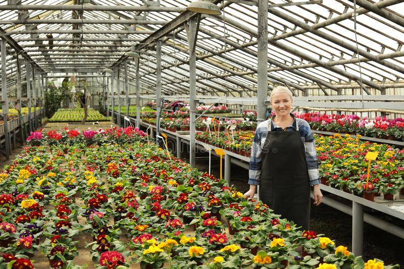 Mature woman in greenhouse among blooming flowers stock images