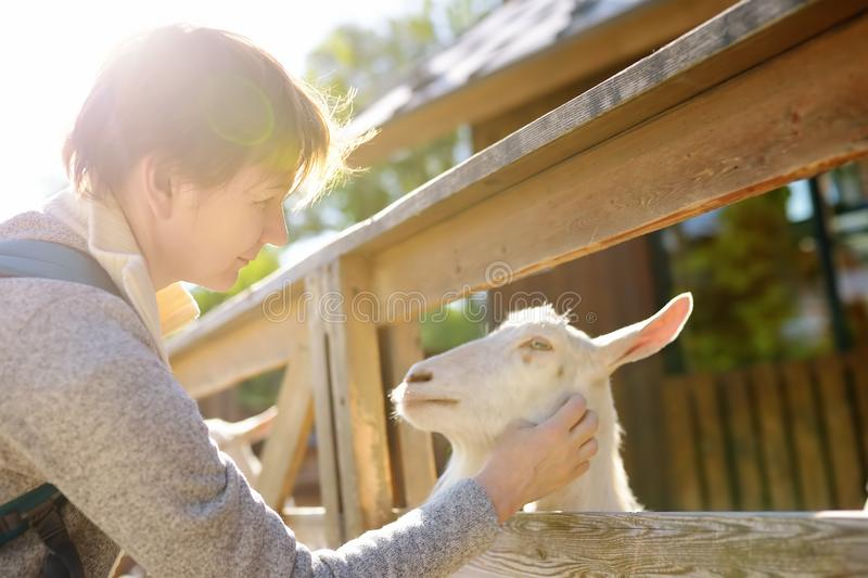 Mature woman petting goat. People in petting zoo. Person having fun in farm with animals. Mature woman petting sheep. People in petting zoo. Person having fun in stock images