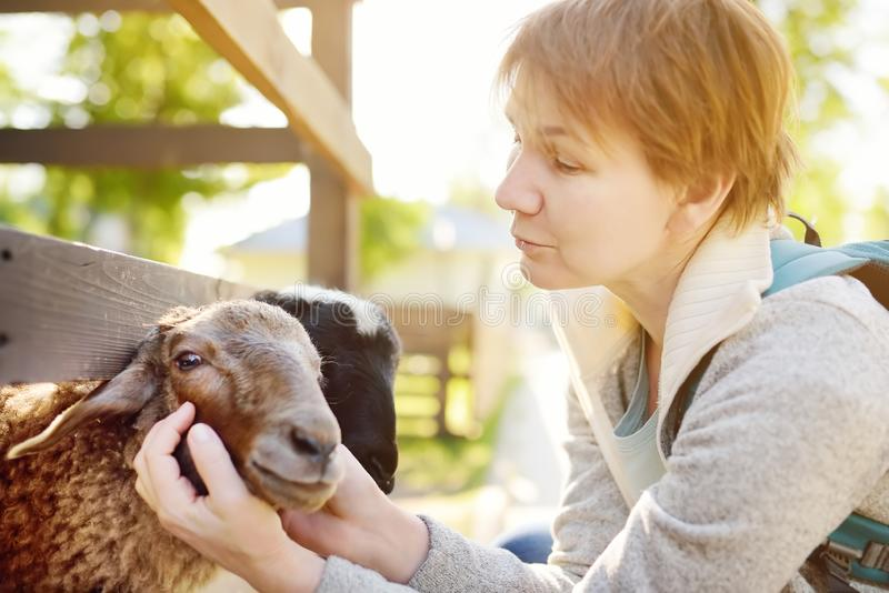 Mature woman petting sheep. People in petting zoo. Person having fun in farm with animals. Fun for urban citizen royalty free stock photos
