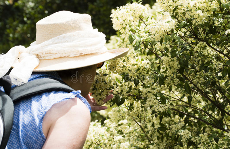 Mature woman smelling flowers stock photos