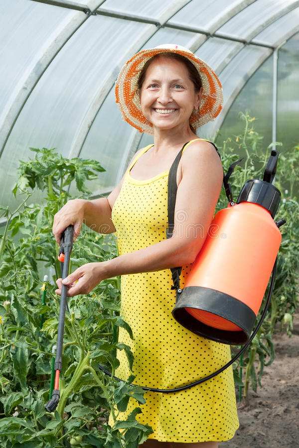 Download Mature Woman Spraying Tomato Plant Stock Image - Image: 24166485