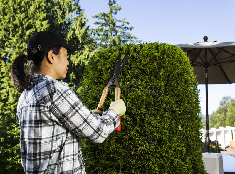 Mature woman Trimming the Hedges near her patio. Photo of mature woman trimming the hedges with patio in background stock photography