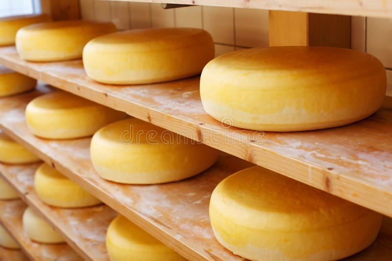 Matured cheese-wheels on shelves. Several mature cheese-wheels on displayed on shelves at the cheesemaking shop royalty free stock photo