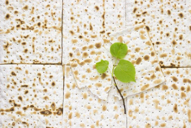 matzah或matza片断一张顶上的照片和一棵小春天新鲜的椴树分支 在木桌上的Matzah犹太的 免版税库存照片