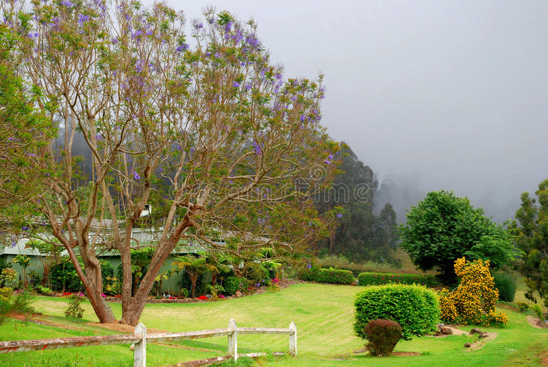 Maui escénico - árboles del Jacaranda imagenes de archivo