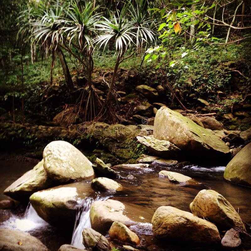 Maui fresh water stream stock photography