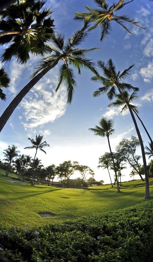 Free Maui Palms Royalty Free Stock Photos - 8144528