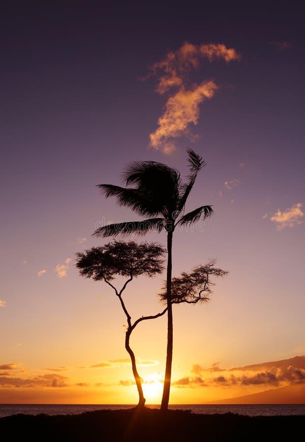 Maui solnedgångträd Hawaii royaltyfri bild