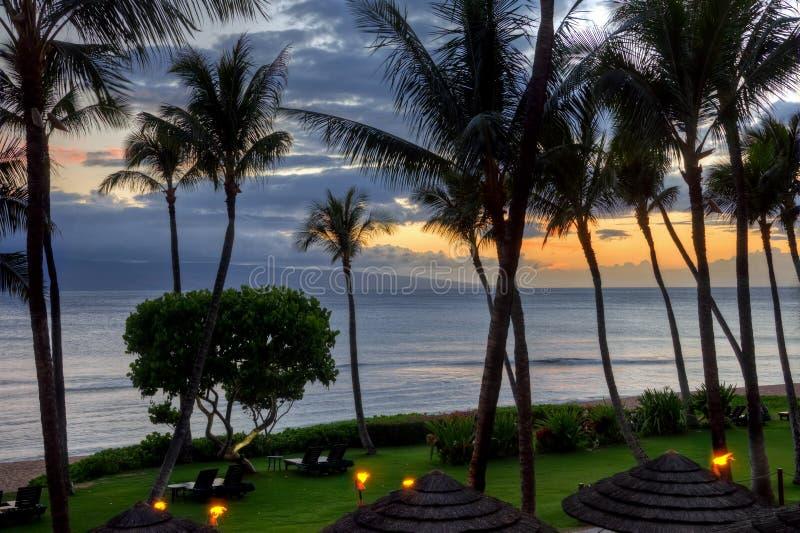 Maui-Sonnenuntergang unter Palmen stockfotografie