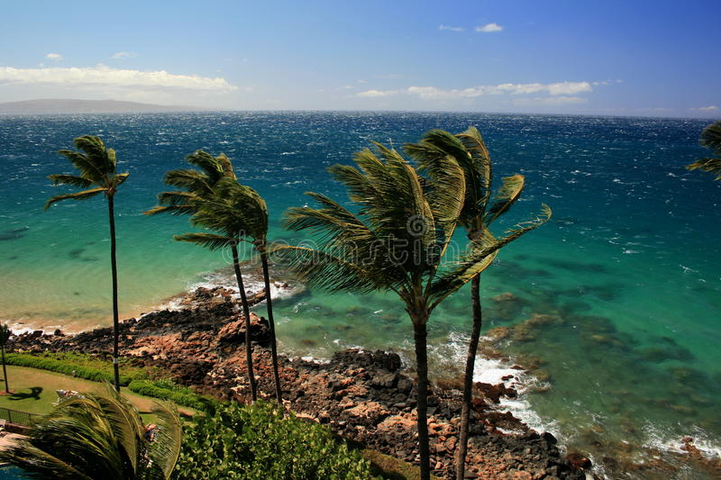 Maui trade winds royalty free stock images