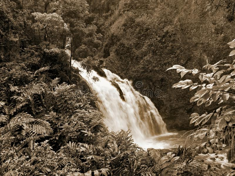 Maui-Wasserfall stockfotos
