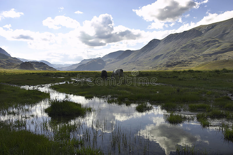Mauntain landscape with horses and cloudy sky royalty free stock image