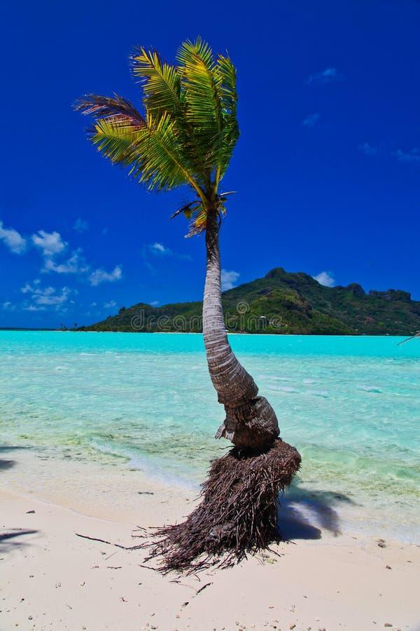 Maupiti海滩,塔希提岛,法属波利尼西亚,接近博拉博拉岛 免版税库存照片