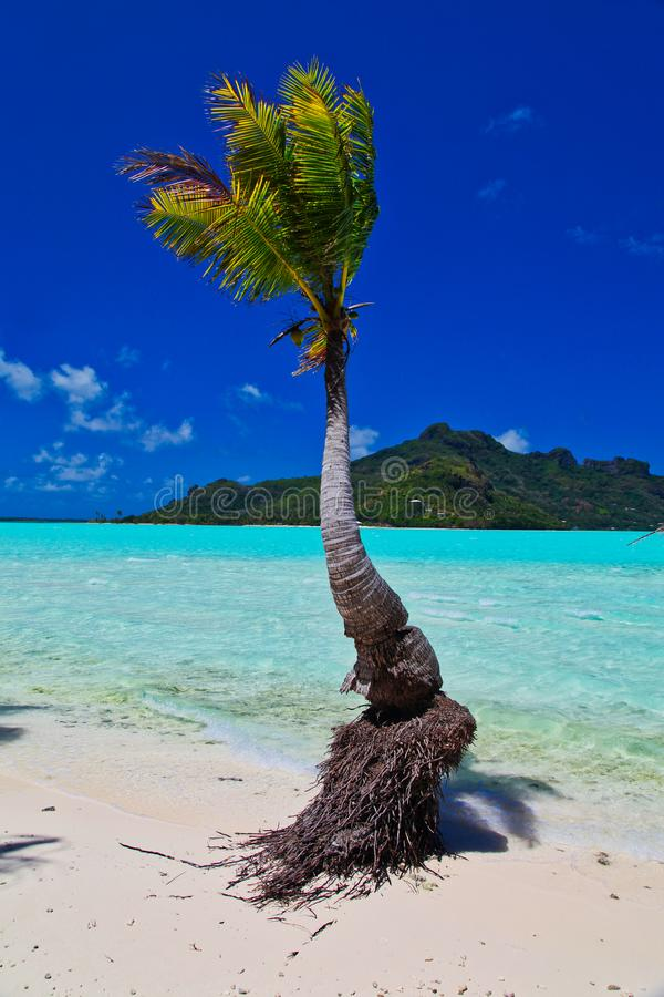 Maupiti beach, Tahiti island, French polynesia, close to Bora-Bora royalty free stock photo