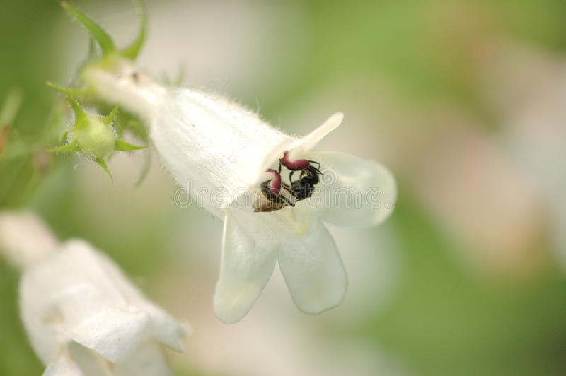 Maurer-Biene stockbild