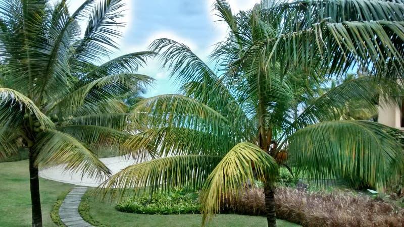 mauritius immagine stock libera da diritti