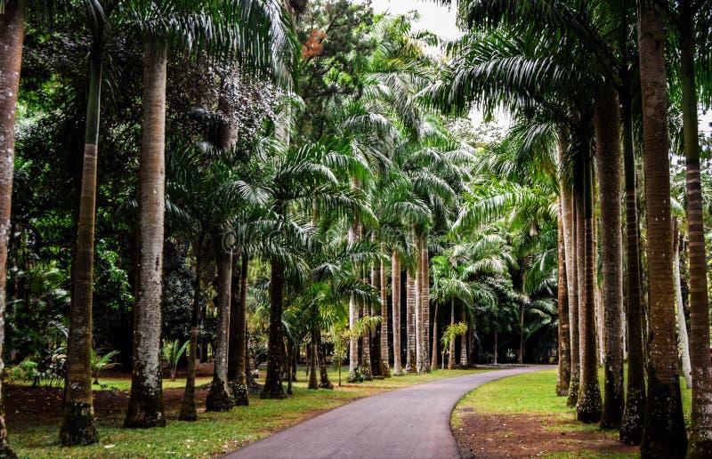 Mauritius National Botanical Garden photos stock