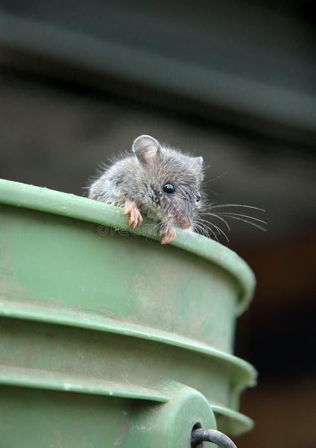 Maus auf Wanne lizenzfreies stockbild