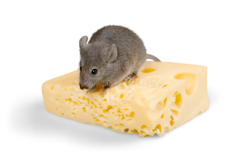 Maus, die Käse isst stockfoto
