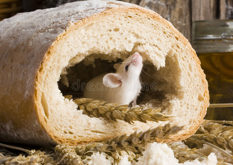 Maus in einem Laib stockbild