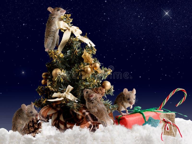 Maus vier verziert den Weihnachtsbaum bis zum Nacht auf sternenklarem Himmel des Hintergrundes lizenzfreie stockbilder