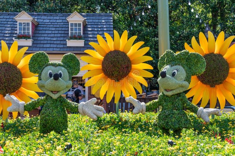 Mausmickey und Minnie topiaryanzeigenzahl auf Anzeige bei Disney World stockfoto