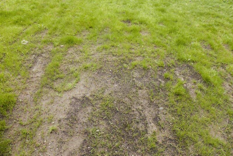 Mauvais soin de pelouse photographie stock libre de droits