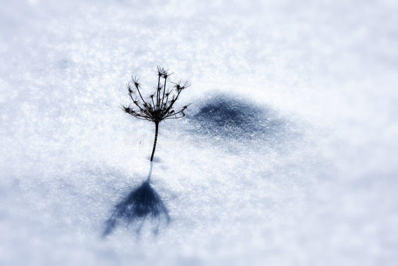 Mauvaise herbe dans la neige images libres de droits