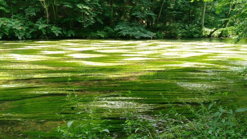 Mauvaise herbe de rivière au soleil images libres de droits