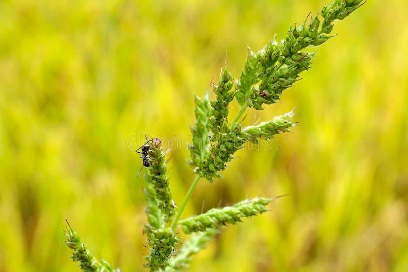 Mauvaise herbe et fourmi image libre de droits