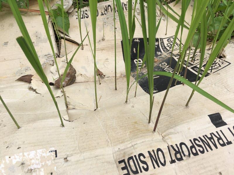 Mauvaise herbe forte photographie stock libre de droits