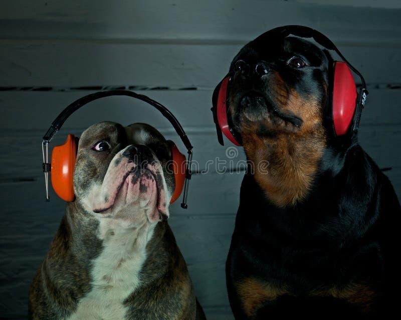 Mauvaise nouvelle année pour des chiens photo libre de droits