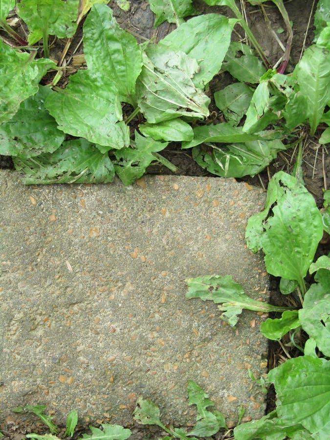 Mauvaises herbes de pierre de progression photo libre de droits