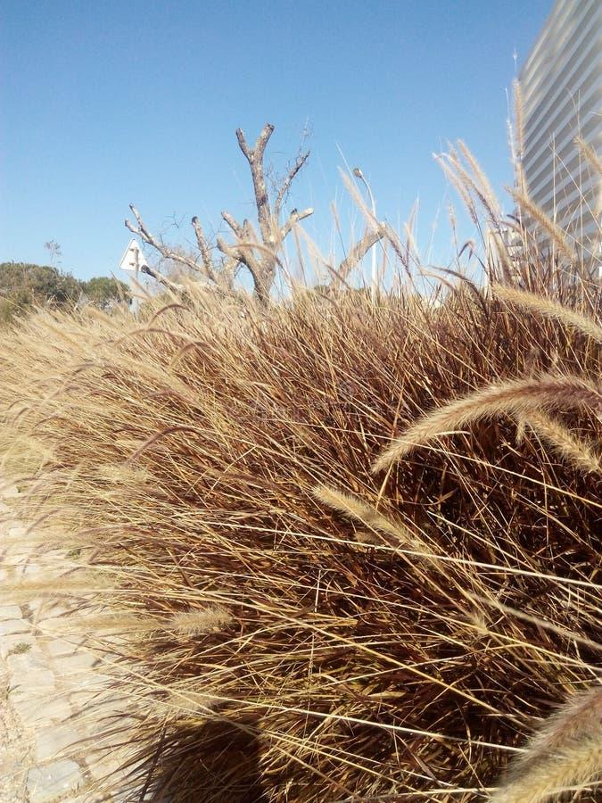 Mauvaises herbes sur la ville images stock