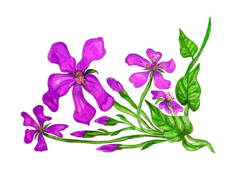 Mauve bloem met bloeiwijzen, waterverfillustratie stock illustratie