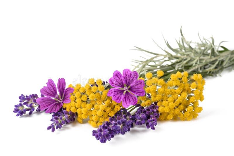 Mauve et helichrysum de lavande photo libre de droits