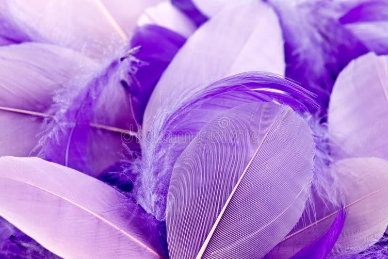 Mauve feathers stock photos