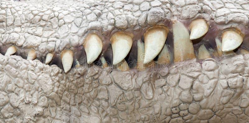 Maxila do dinossauro fotografia de stock