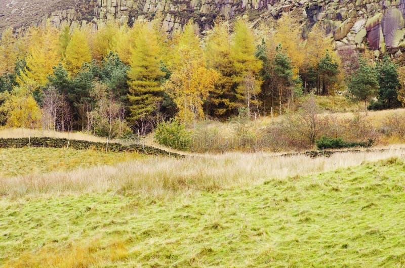 Maximal Greenfield för områdesDovestone behållare, England, UK fotografering för bildbyråer