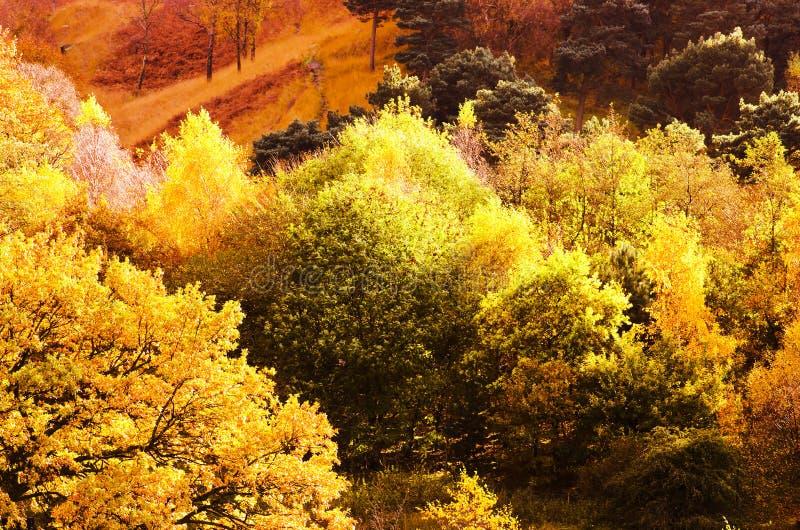 Maximal Greenfield för områdesDovestone behållare, England, UK royaltyfria bilder