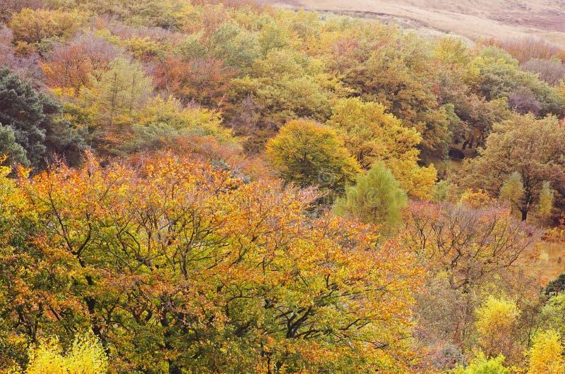 Maximal Greenfield för områdesDovestone behållare, England, UK arkivbild